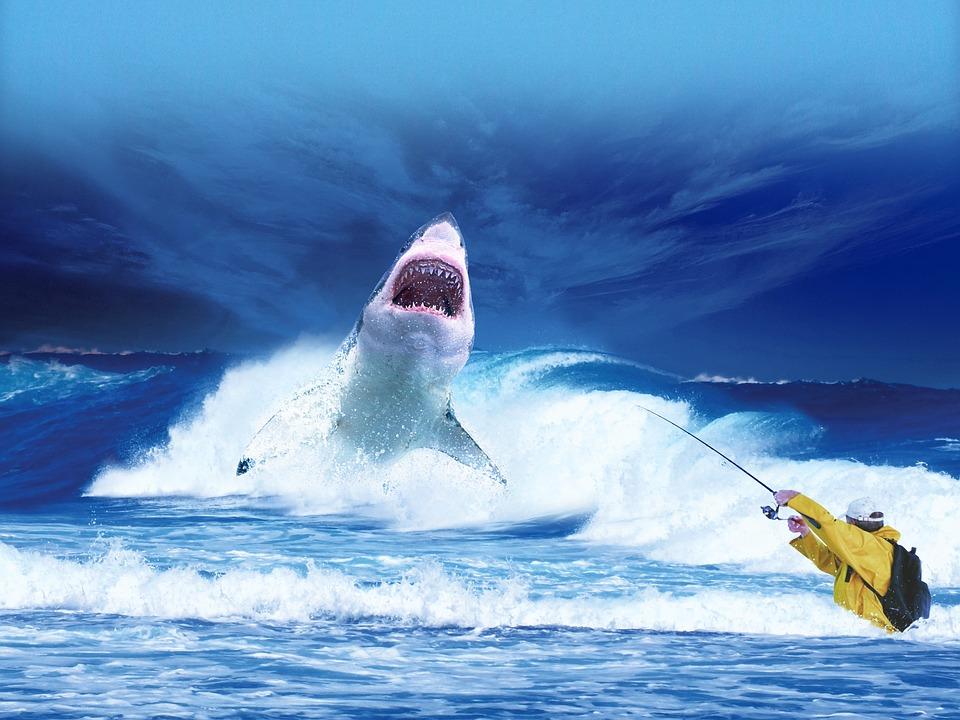 Le Requin peut-il devenir un « animal-emblème » pour la relance du tourisme sur l'Île de La Réunion ?