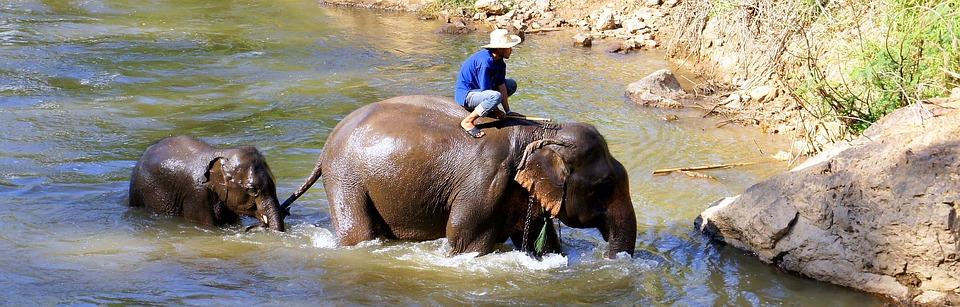 Balade touristique à dos d'éléphants – Stop ou encore?
