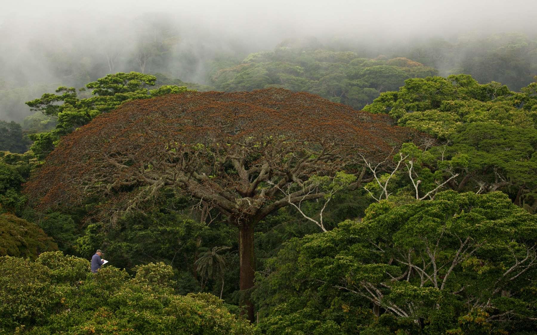 Sylvotourisme ou l'art de savoir mettre en tourisme la forêt